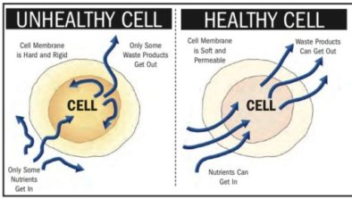 healthy cell vs unhealthy cell and the development of cancer