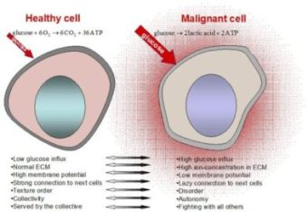malignant cell vs healthy cell