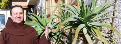 Father Romano Zago aloe arborescens remedy