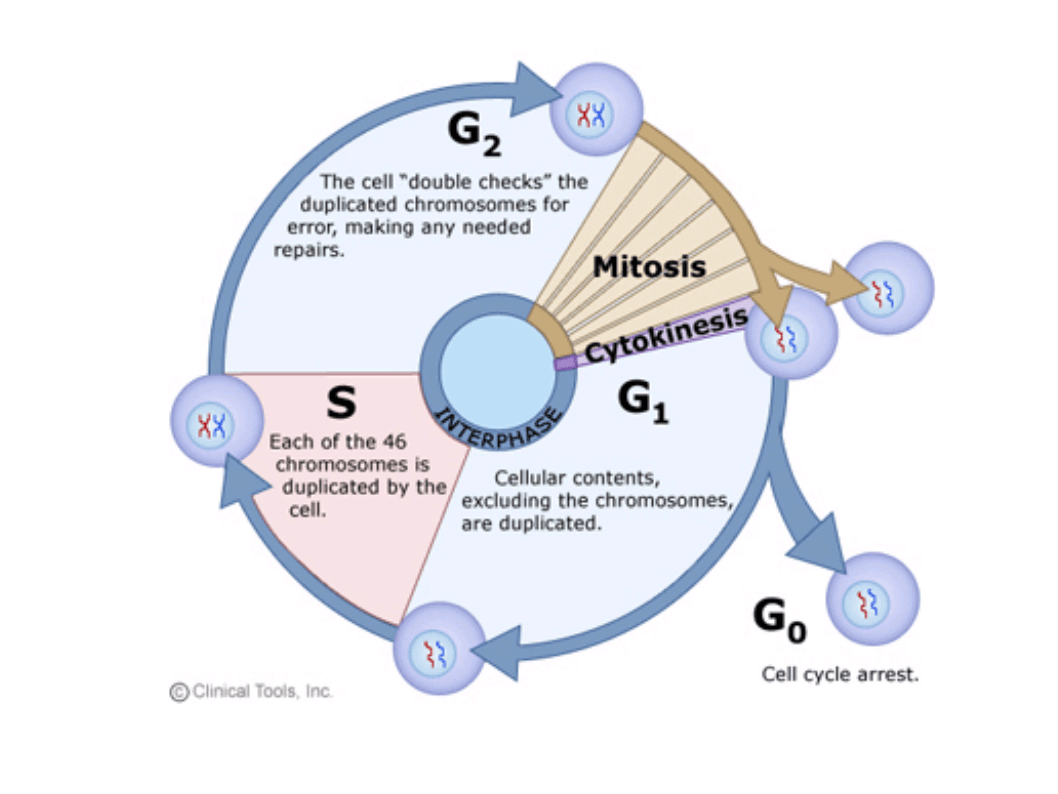 Biology Cancer Ecology