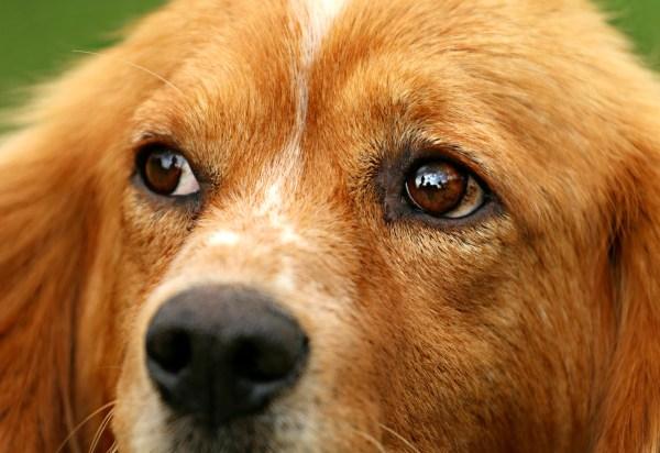 dog-1530644
