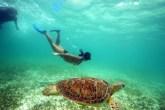 Swimming with Turtles - Akumal