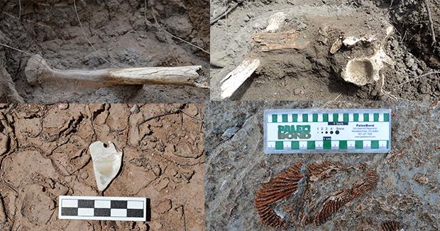 fosiles chihuahua