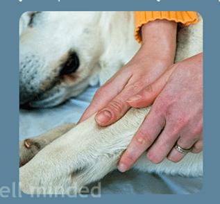 pet-massage