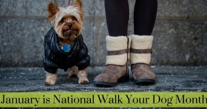 January is National Walk Your Dog Month