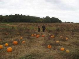 pumpkinpickin02l