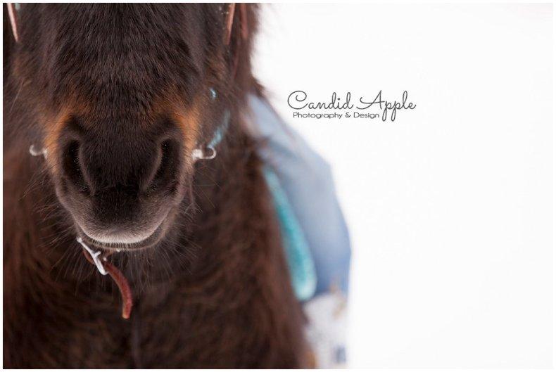 equine-kelowna-photographer_0023