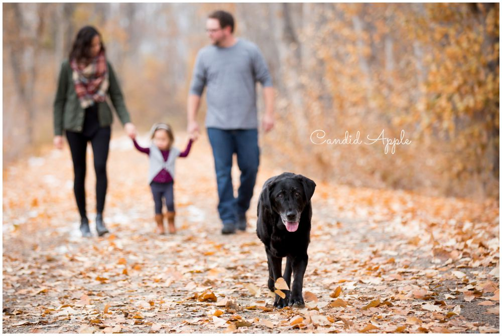 Family Walking Holding Hands with Their Dog in the Foreground