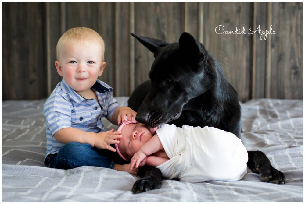 A  back dog kissing a newborn baby girl