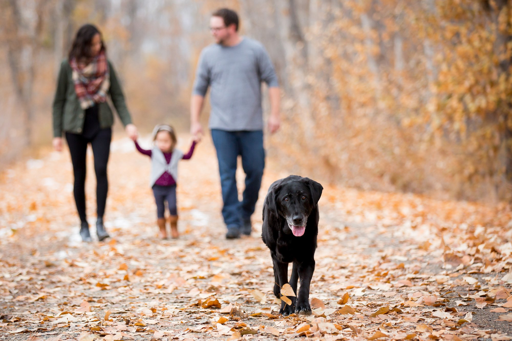 An older dog walking ahead of his family