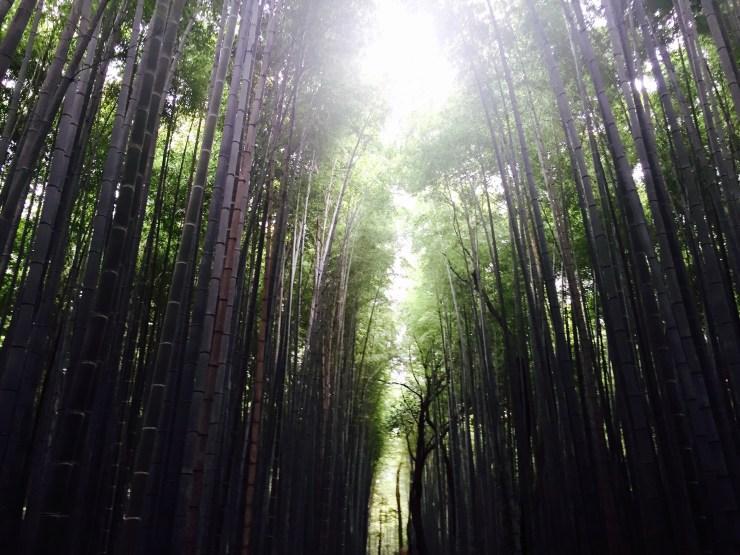 Arashiyama Kyoto 29