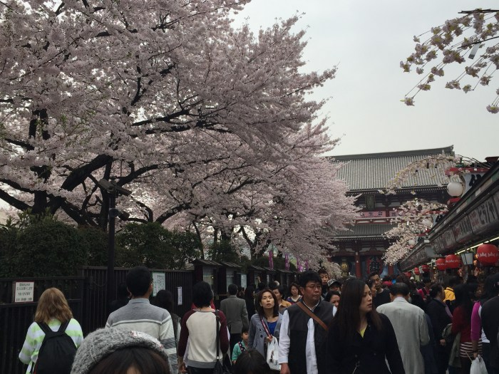 How to Travel to Tokyo During the Cherry Blossom Season under P30,000