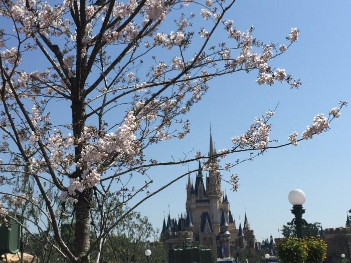 Travel to Tokyo Cherry Blossom Budget 1