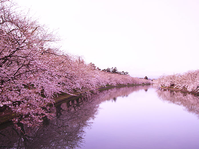 cherry blossom spots in japan 9