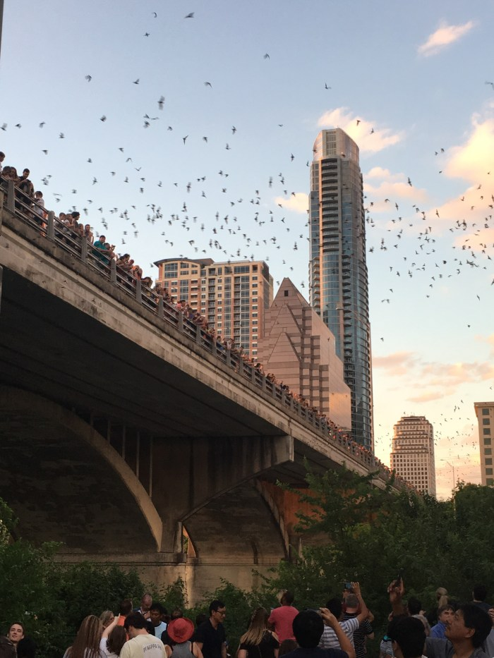 bats austin south congress 4