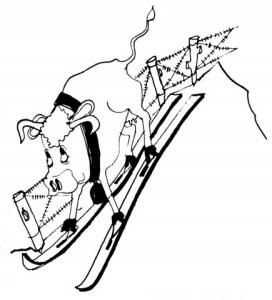 Vache ski FC 38