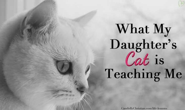 daughters-cat