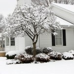 Top Tips To Protect Your Home Against Pests This Winter