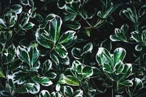 Using Plants To Create A Home Enhanced