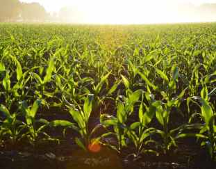 3-ways-to-improve-crop-yields