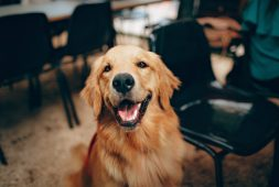 how-to-stop-dog-separation-anxiety