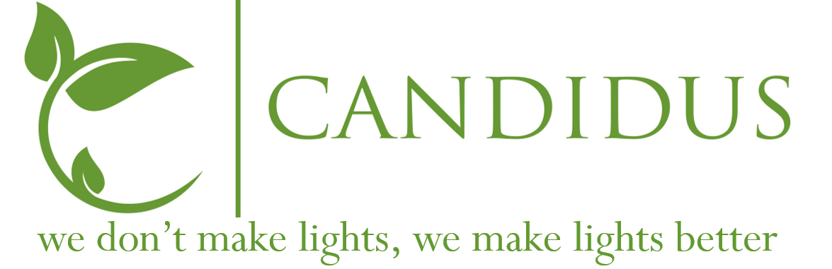 Candidus: bright | clear| transparent; clean/spotless; lucid; candid; kind; innocent | pure