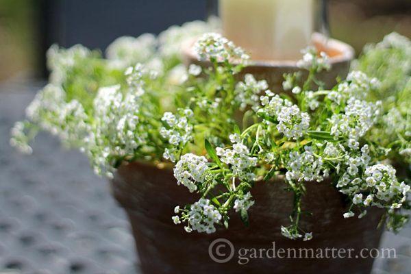 Flower-Pot-Centerpiece-close-gardenmatter.com_