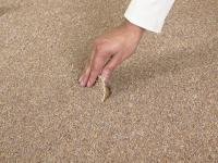 Average Lifespan Of Residential Carpet | Taraba Home Review