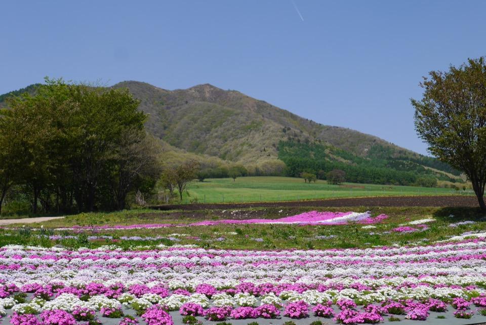 蒜山高原の花畑