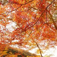 宝塚の紅葉