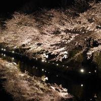 岡崎疎水ライトアップ
