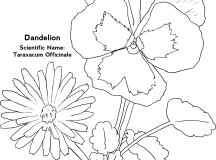 Flower Coloring Pages Free Coloring Pages Candy Coloring Pages