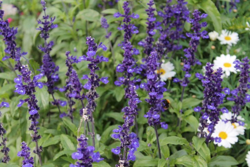flowers, bluebells, blue flowers, flower photography, alesund norway