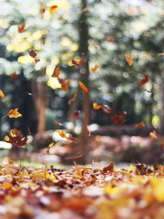 A Family Autumn Bucket List to Celebrate Fall
