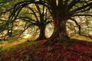 tree-3072446_640