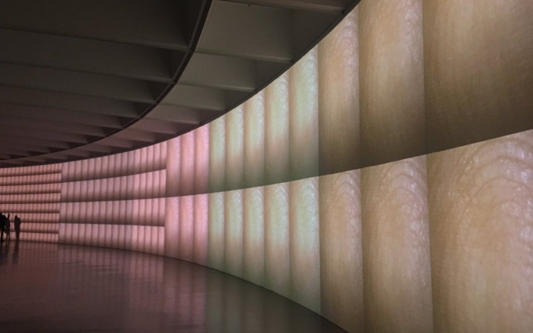 Field Trip: Pulse at the Hirshhorn
