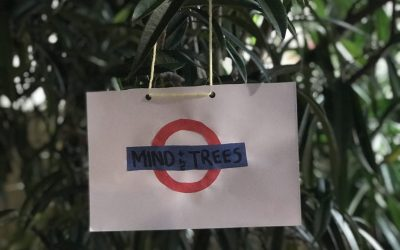 Mind Your Head, Not Your Business: Lessons Learned from the Community Tree – By TCF Member Hank Balch