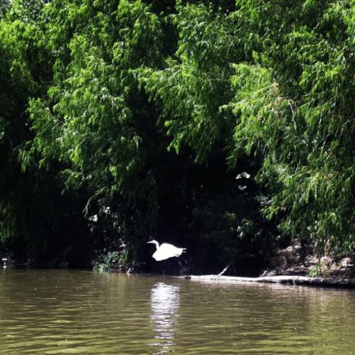 2013 Sept - Heron