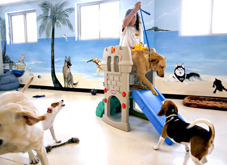 Doggie-day-care