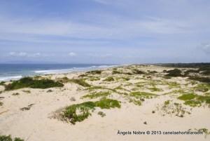 comporta_dunes (6)