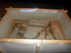 foz_coa_museu_gravuras (7)