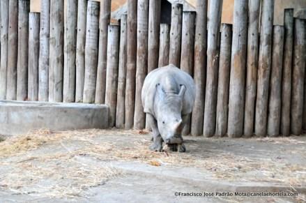 zoo2015-011