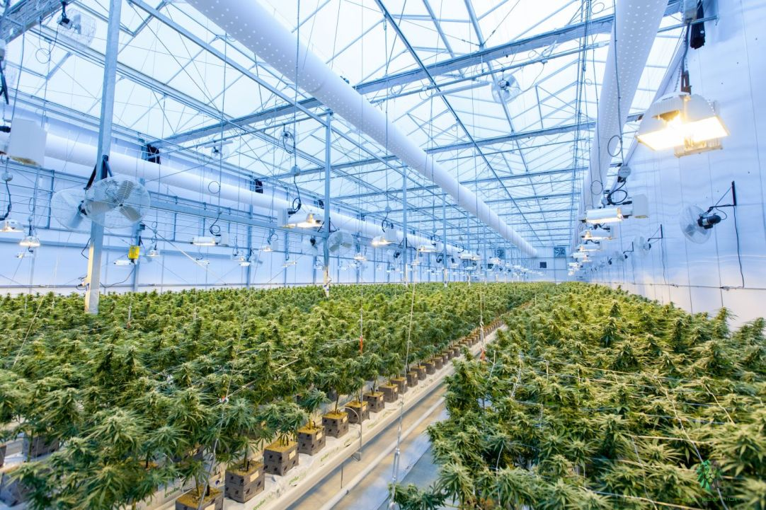 jersey start up cannabis cultivation license