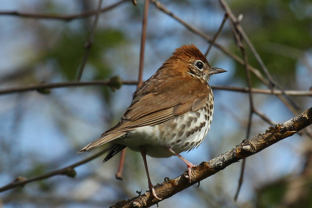 New Report Sounds Alarm On State Of North American Birds