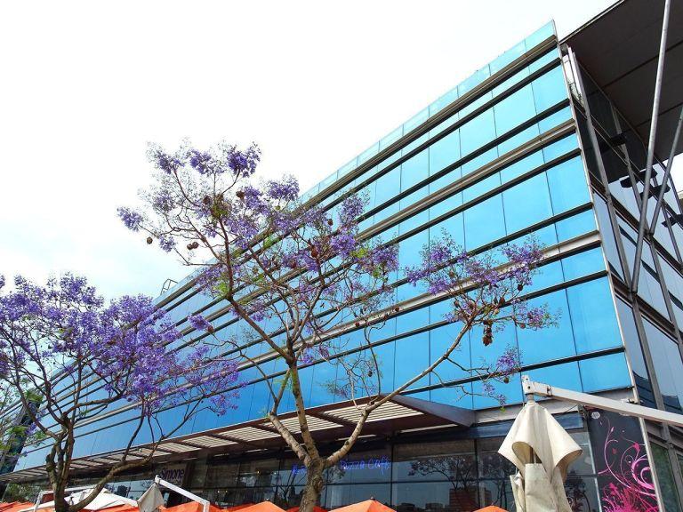 flores purpura y arquitectura en buenos aires