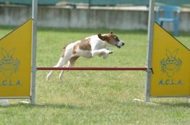 Dora in gara nazionale di agility