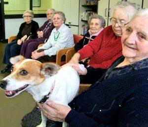 anziani-e-animali