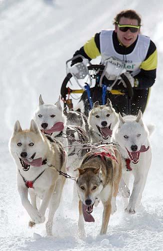 Musher con i suoi cani