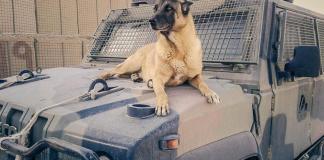 cane anti esplosivo esercito italiano