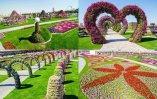 Dubai Miracle Garden (14)
